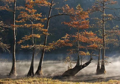 Cypress in mist by Katherine Worley