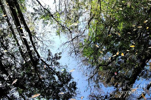 Cypress Reflections by Theresa Willingham