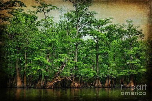 Cypress Trees by Joan McCool
