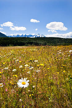 Daisies and the Seven Sisters by Brandon Broderick