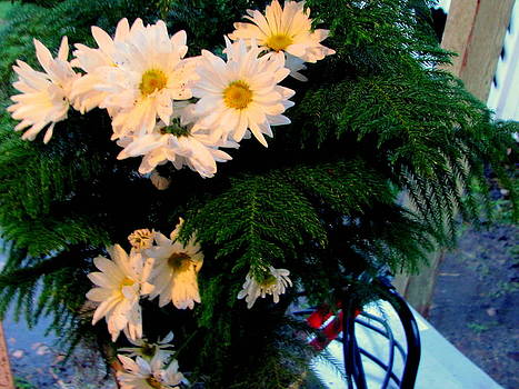 Daisies in Palm plant by Amy Bradley