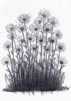 Daisy Bush by Di Fernandes
