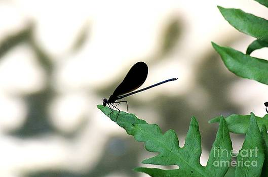 Damsel Fly by Theresa Willingham