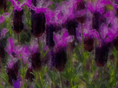 Dancing Lavenders by Gina  Art Photography