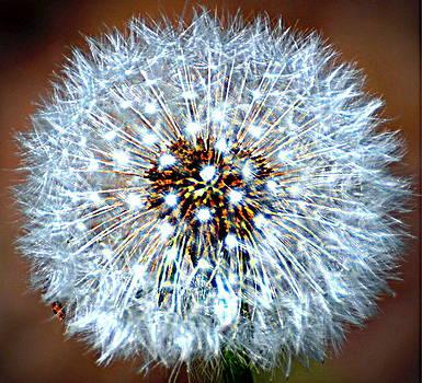 Marty Koch - Dandelion Seed