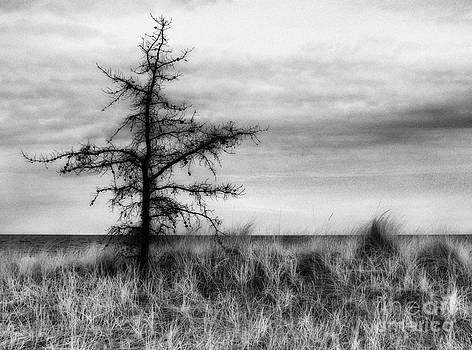 Jeff Holbrook - Dead Tree on Lake Huron