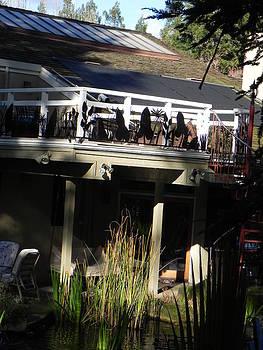 Deck railing by Steve Mudge