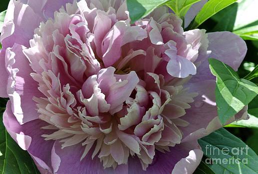 Christine Belt - Deep in the Peony Garden