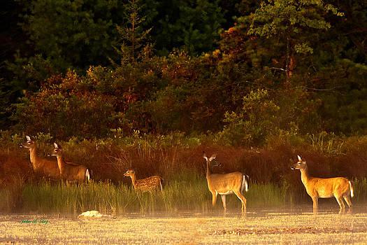 Deer at Edge of Pond by John Stoj