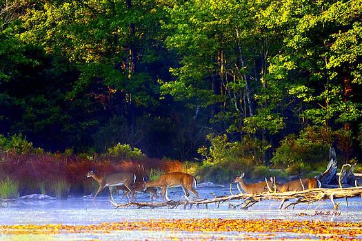Deer Crossing Pond by John Stoj