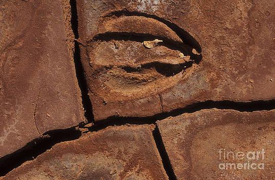 Sandra Bronstein - Deer Imprint in Mud