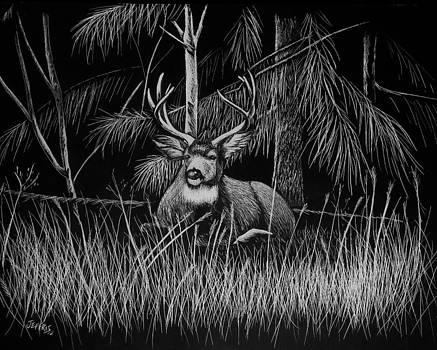 Deer in the Woods by Jennifer Jeffris