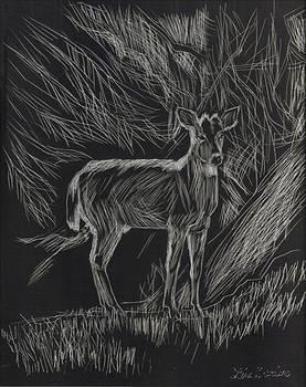 Deer by Lisa Guarino