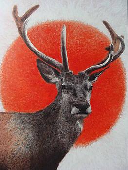 Deer2 by Supot Pimpan