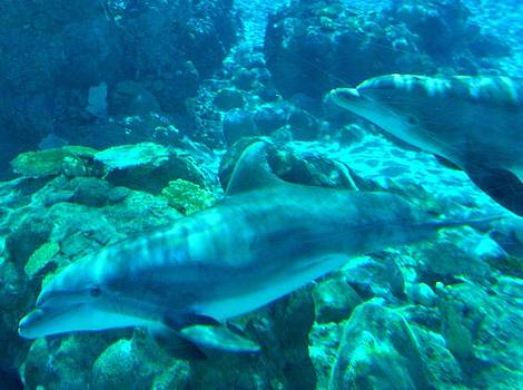 Delfin by Anne Back