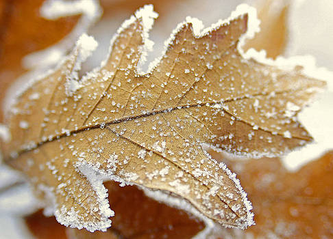 Diamonds and Rust by The Forests Edge Photography - Diane Sandoval