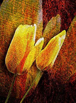 Svetlana Sewell - Digital Tulips