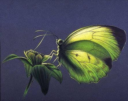 Dina Yellow by Shawn Kawa