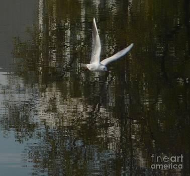 Discovery 1 Bird Flew by Alisa Tek
