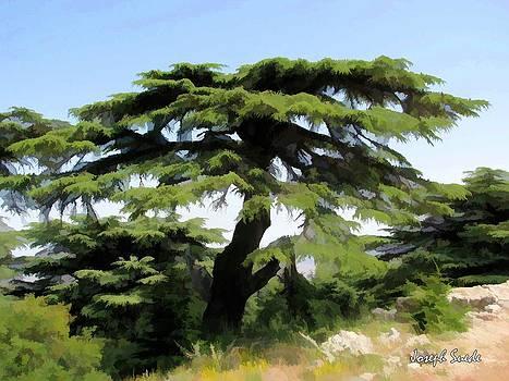 DO-00511 Cedar Forest by Digital Oil