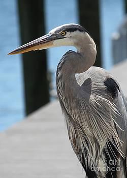 Dockside Heron by Theresa Willingham