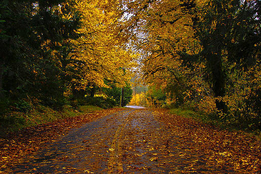 Dodge Road Yellows by Tj Voelker