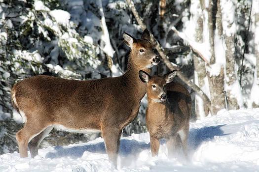 Doe a Deer by Nancy Dempsey