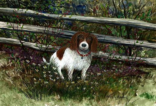 Dog Fence by Steven W Schultz