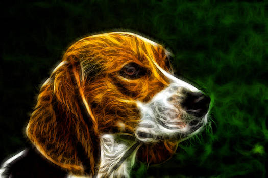 Dog by Ratan Sonal