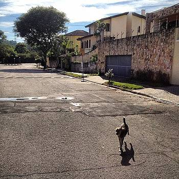 Dog Walk! #nofilter #dog #insta by Rodrigo Santos