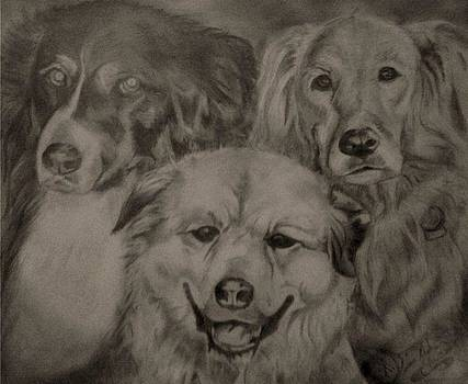 Dogs by Duane Mathes