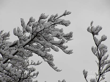 Judy Via-Wolff - Dogwood Tree