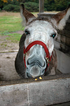 LeeAnn McLaneGoetz McLaneGoetzStudioLLCcom - Donkey Nibbles