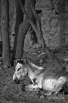 Nabucodonosor Perez - Donkey smile