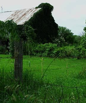 Down on the Farm by Anna Villarreal Garbis
