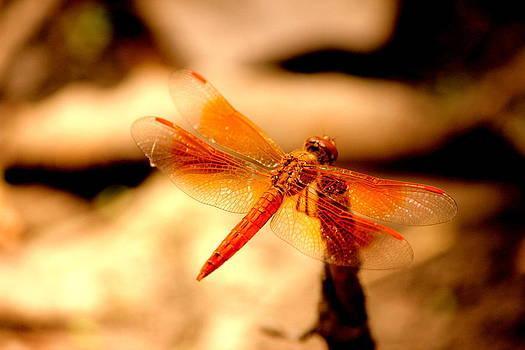 Dragon Fly by Manaswinee Mohanty