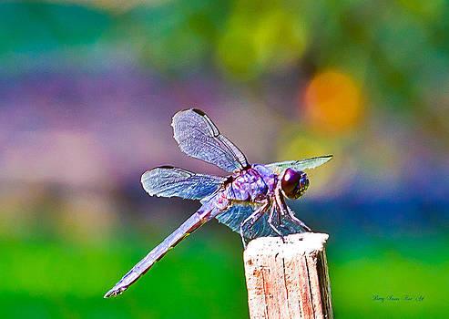 Barry Jones - Dragonfly 0004