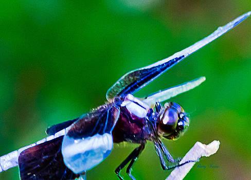 Barry Jones - Dragonfly 0005