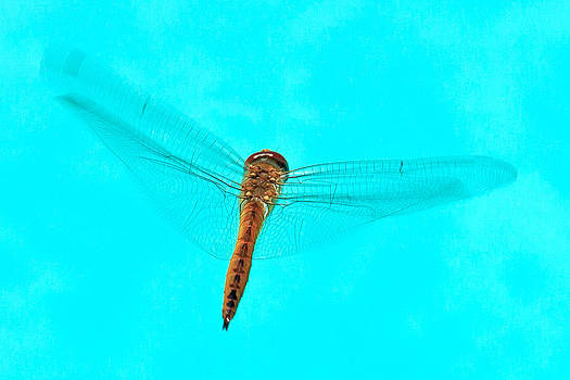 Dragonfly by Miguel Capelo