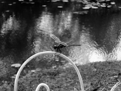Dragonfly on Rim by Floyd Smith