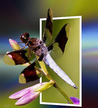 Barry Jones - Dragonfly Portal
