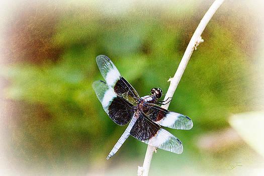 Barry Jones - Dragonfly Respite 002