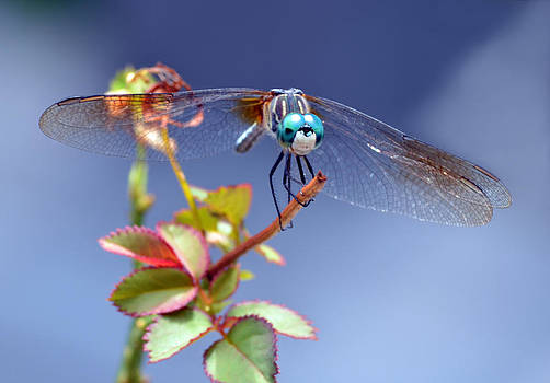 Dragonfly Visit by Sandi OReilly