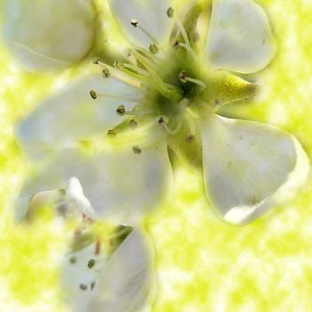 Dreams of Spring by Phachesnie Studio