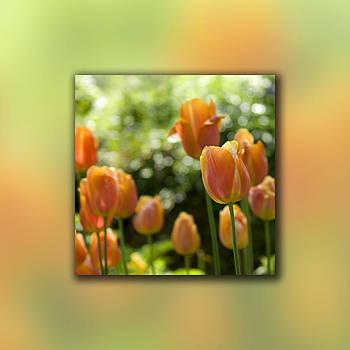 Dreamy Tulip Flowers by Pixie Copley