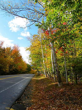 Driving Though the Birches by Sarah Egan