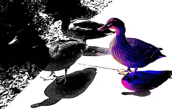 Ducks Like Art 2 by Sheri Parris
