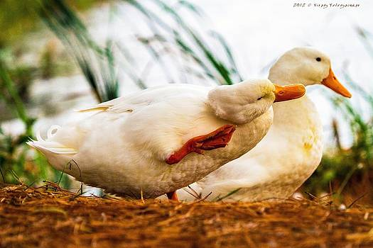 Ducky - say it again please by Virag Yelegaonkar