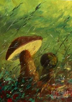 Due Funghi by Sandro  Mulinacci