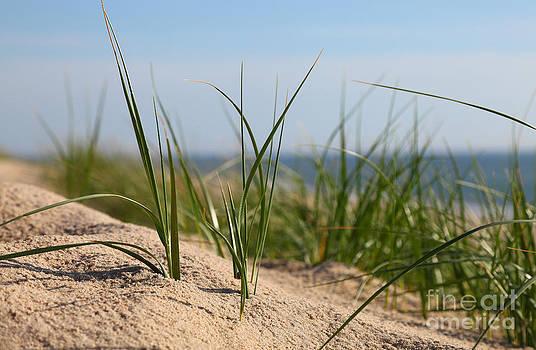 Dune by Holger Ostwald